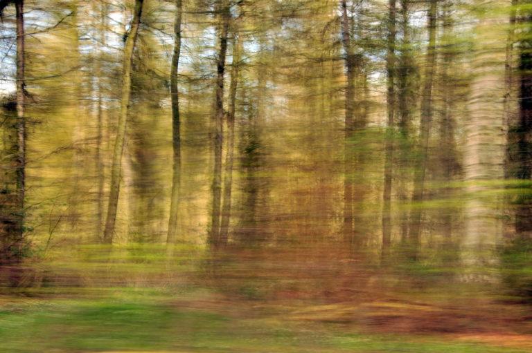 Lyrischer Wald