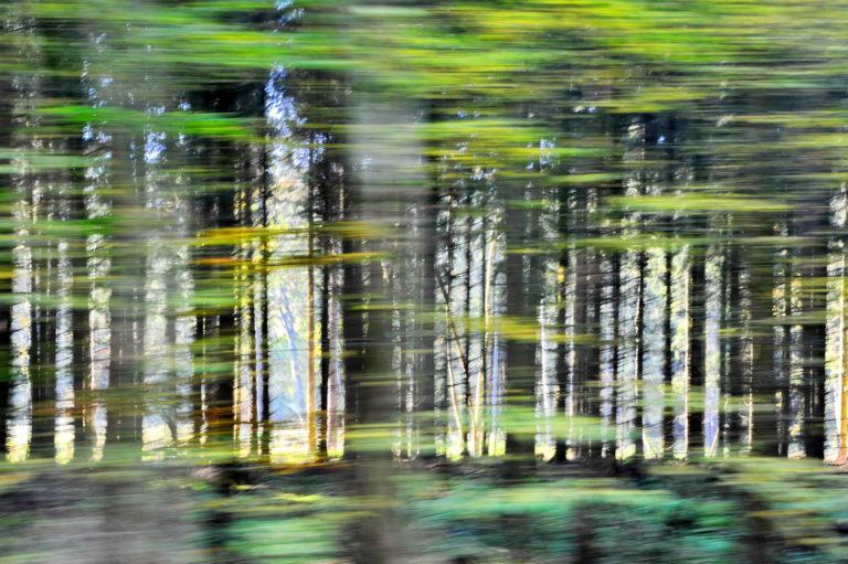 Ein Streifzug durch den Wald