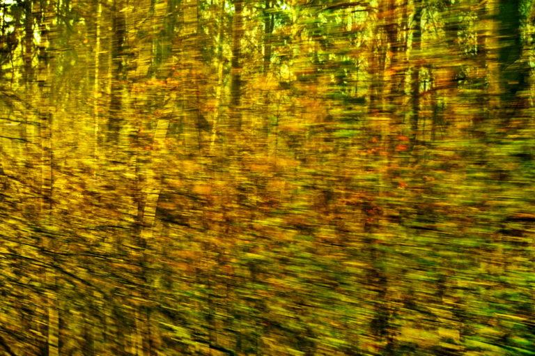 Ein Goldener Regen auf dem Weg durch die Zeit