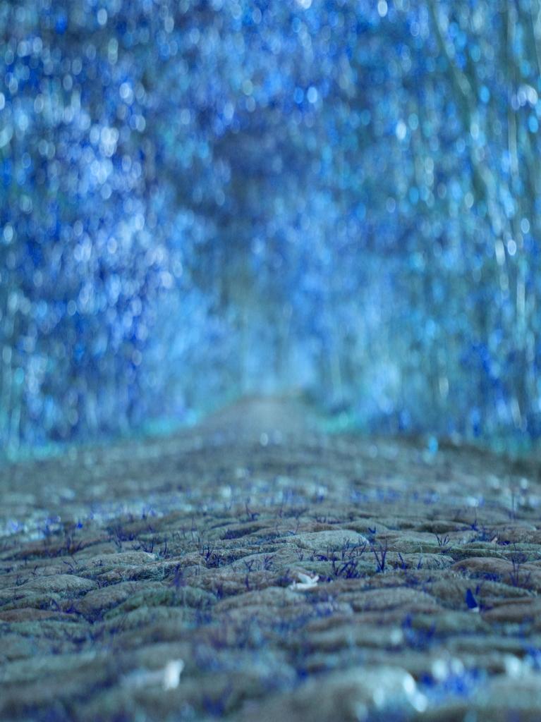 der weg der Traeume